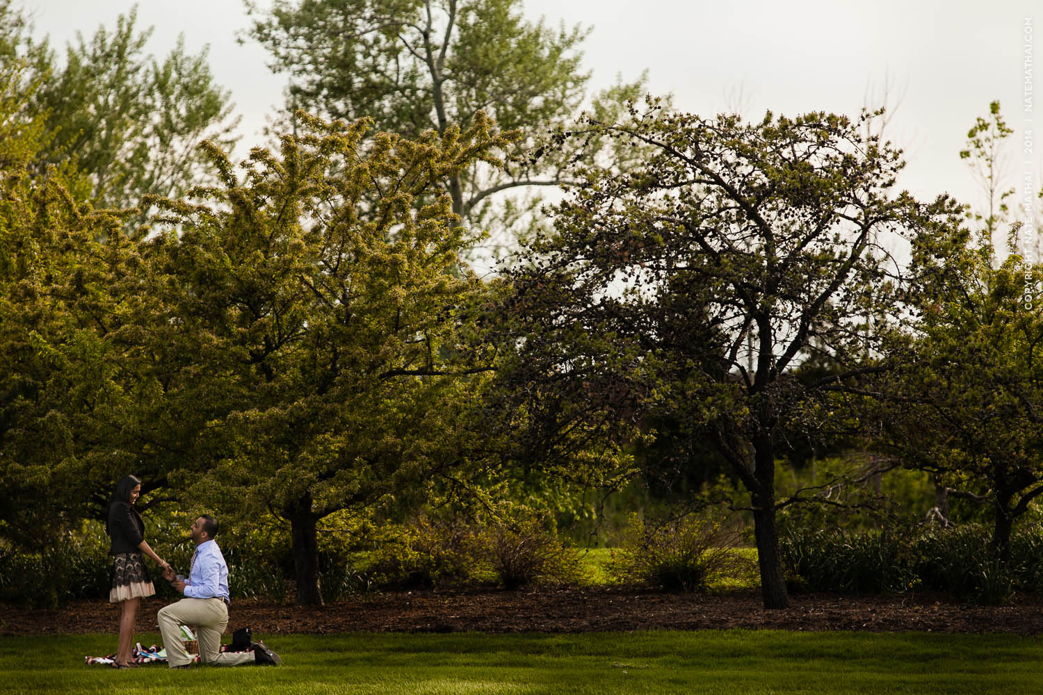 top image for Nisha + Roji's Botanic Gardens Proposal Teasers by chicago wedding photographer nate mathai